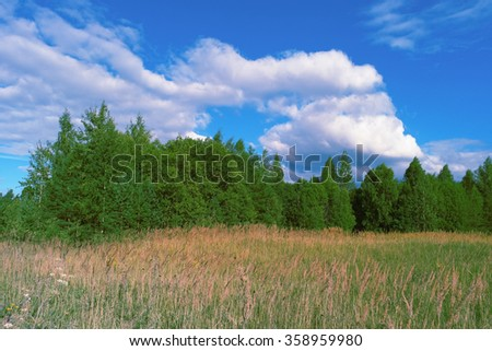 Beautiful summer landscape with grass, forest, sky and clouds - stock photo