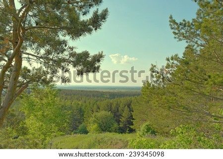 Beautiful summer landscape with pine wood - stock photo