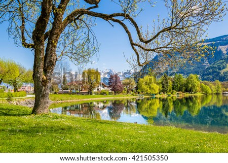 Beautiful summer landscape with tree and lake, Zell am See, Austria - stock photo
