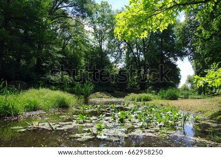 Beautiful summer landscape with trees and a pond. Reflection, water.