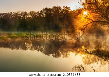 Beautiful summer morning in wood with sun rays and a fog from the river - stock photo