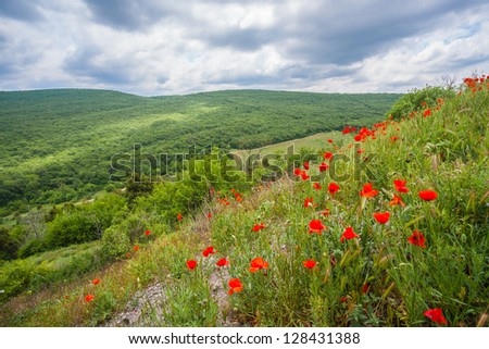 Beautiful summer mountain landscape with red poppy flowers - stock photo