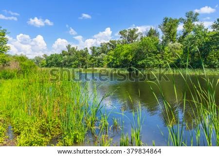 beautiful summer river scene - stock photo
