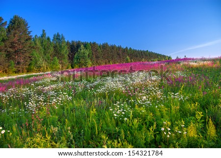 beautiful summer sunrise over a blossoming meadow - stock photo