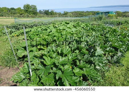 Beautiful summer vegetable garden