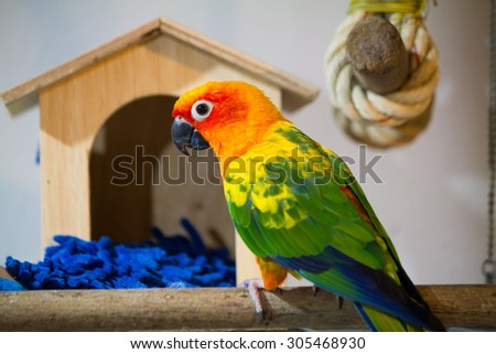 Beautiful sun conure playing in front of bird house - stock photo