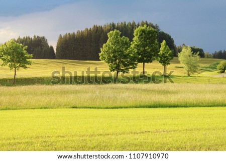 Beautiful sun lighted meadows in the evening after storm, trees, Allgäu, Bavaria
