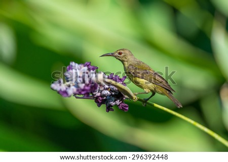 Beautiful Sunbird and flower