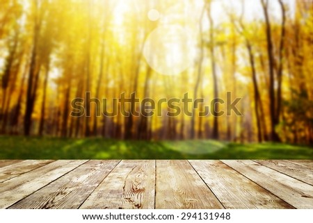 Beautiful sunlight in the autumn forest. Beauty nature background - stock photo