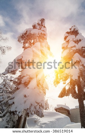 Beautiful sunlight in winter landscape with snow covered trees, wonderful winter in snowfall day. - stock photo