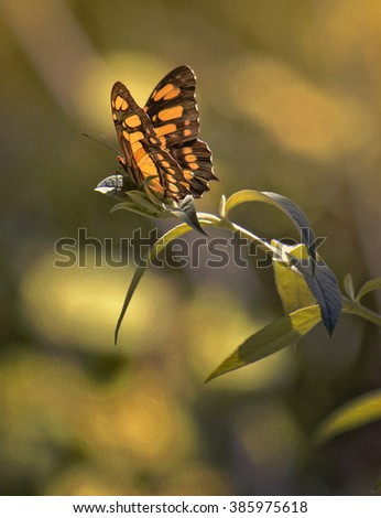 Beautiful Sunlit Butterfly Atop Plant - stock photo
