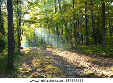 Beautiful sunny autumn dawn in the forest - stock photo