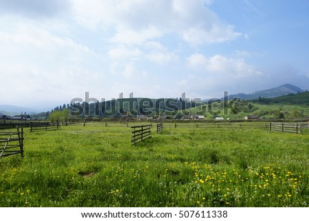 Beautiful sunny day at the foot of the mountains, green grass with yellow flowers