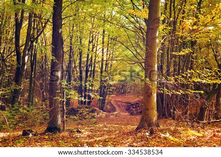 Beautiful sunny day in the autumn forest - stock photo
