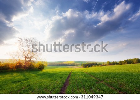 Beautiful sunny landscape