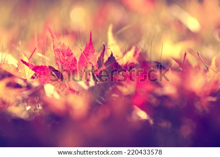 Beautiful sunny retro autumn blurry leaves on forest floor. Selective focus and vintage filter effect used. - stock photo