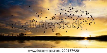 Beautiful sunrise across water with golden clouds and a flock of bird - stock photo