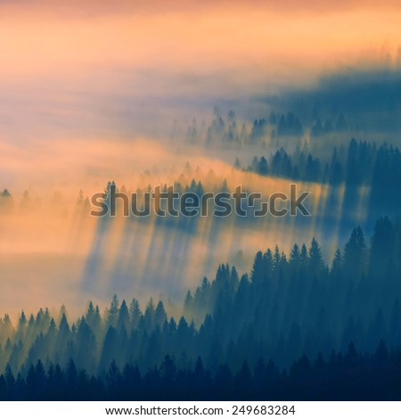 Beautiful sunrise in a Carpathian misty valley. Forest hill covered with magic golden fog - stock photo