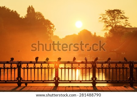 Beautiful sunrise in Amsterdam, the Netherlands, with pigeons on the bridge in golden sunlight - stock photo