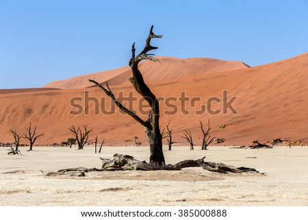 beautiful sunrise landscape of hidden Dead Vlei in Namib desert with blue sky, this is best place of Namibia - stock photo