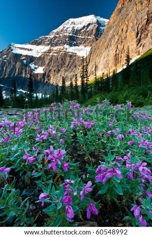 beautiful sunrise on a mountain - stock photo