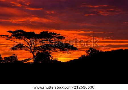 Beautiful sunrise out in the country with silhouetted of tree .