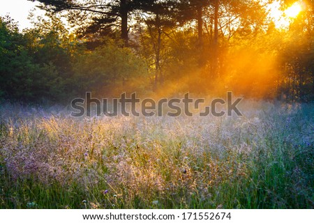 beautiful sunrise over a summer blossoming meadow - stock photo