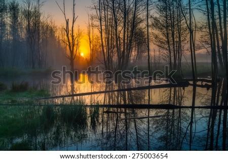 Beautiful sunrise over foggy wetlands. Wild polish landscape. - stock photo