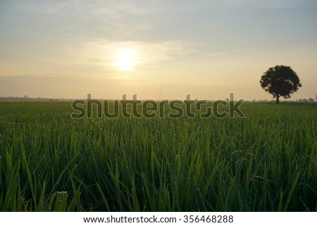 Beautiful sunrise over paddy field. Soft focus due to long exposure shot. Visible noise due to high ISO. Composition of nature.  - stock photo