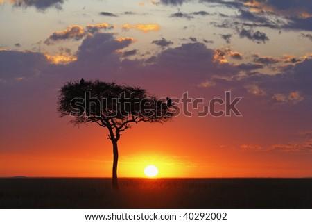 Beautiful sunrise over the vast Serengeti plains in the Masai Mara National Reserve, Kenya. - stock photo