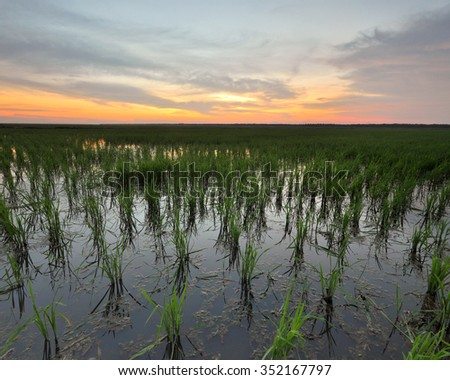 Beautiful sunrise/sunset over paddy field. Soft focus due to long exposure shot. Composition of nature.