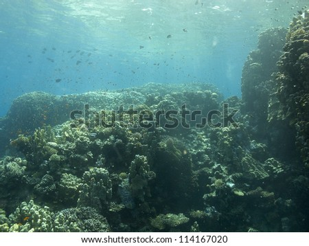 Beautiful  sunrise underwater view with coral formation at shallow water, Red sea, Egypt