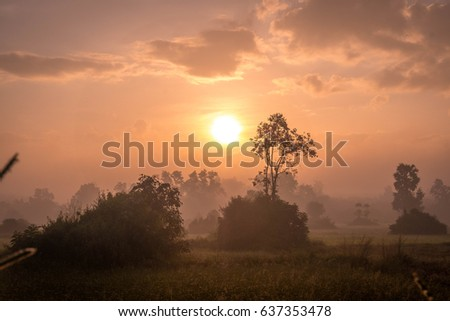 Beautiful sunrise with trees and grass field in countryside