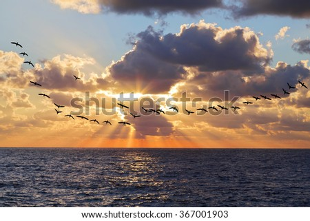 Beautiful sunset above the sea and the flight of a flock of cormorants