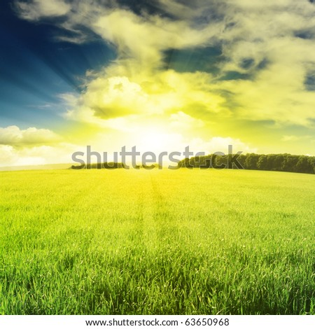 beautiful sunset and field - stock photo