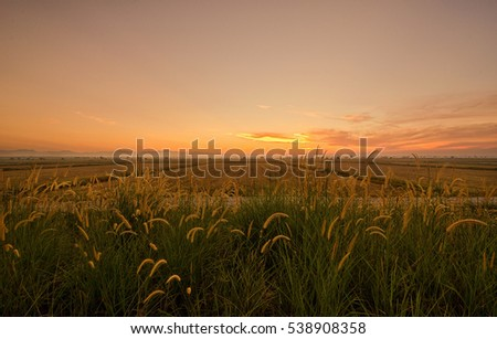 Beautiful Sunset At Paddy Field