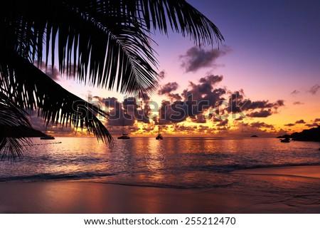 Beautiful sunset at Seychelles beach with palm tree - stock photo