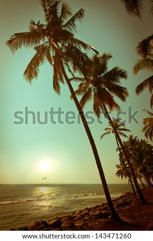 Beautiful sunset at tropical beach with palm trees. Ocean landscape in vintage style. India - stock photo