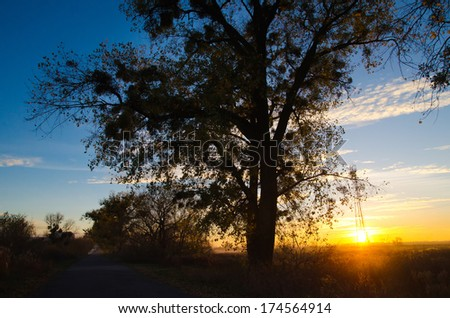 beautiful sunset behind a tree