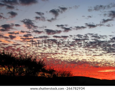 Beautiful Sunset behind Silhouette Trees Monterey California - stock photo