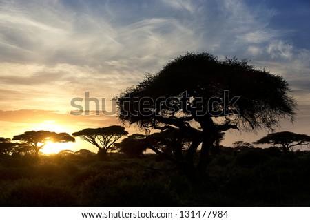 Beautiful sunset in Amboseli National Park 12 - stock photo