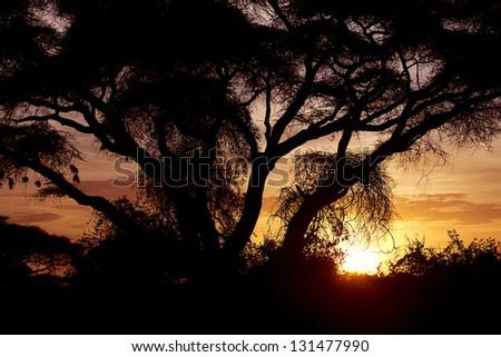Beautiful sunset in Amboseli National Park 13 - stock photo