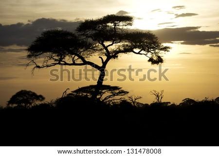 Beautiful sunset in Amboseli National Park 02 - stock photo