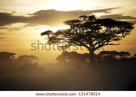 Beautiful sunset in Amboseli National Park 07 - stock photo