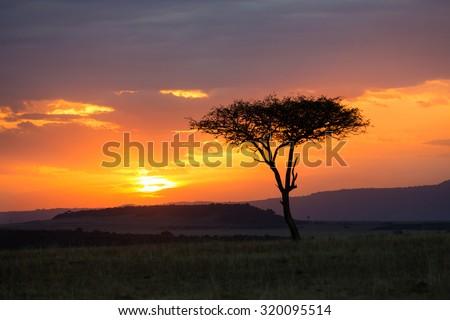 Beautiful sunset in Kenya, Africa - stock photo