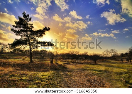 Beautiful sunset in the dunes of national park the AWD in the Netherlands in winter