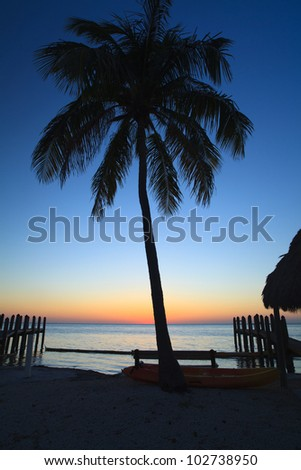 Beautiful sunset in the Florida Keys with palm tree silhouette.