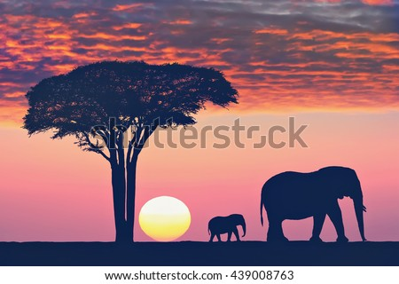 Beautiful sunset in the Serengeti Park. Acacia tree and  family of elephants against sunset.Tanzania. Africa. Concept of environment,rescue preservation and animals of the Africa. Toned colors image