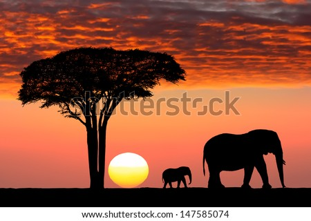 Beautiful sunset in the Serengeti Park. Tanzania. Africa. - stock photo