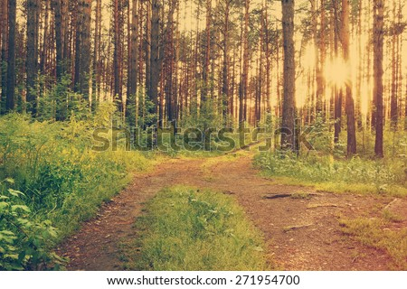 beautiful sunset in the woods, dirt road in the woods, retro film filtered, instagram style  - stock photo